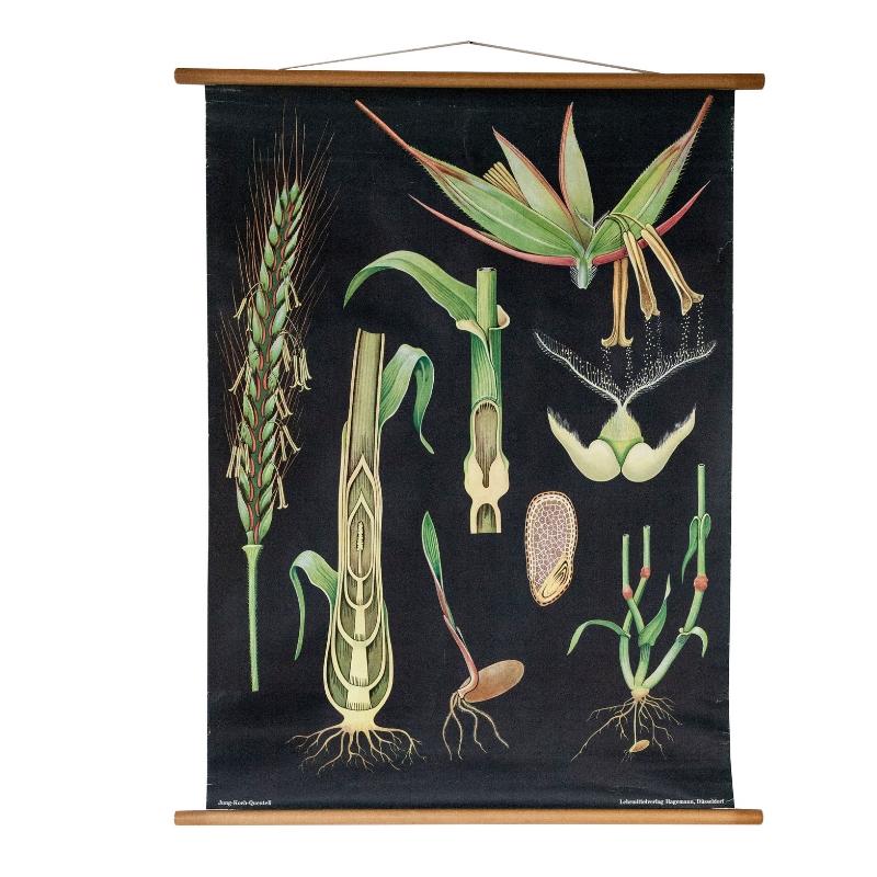 Botanical Wall Chart by Jung, Koch & Quentell for Hagemann 1960s