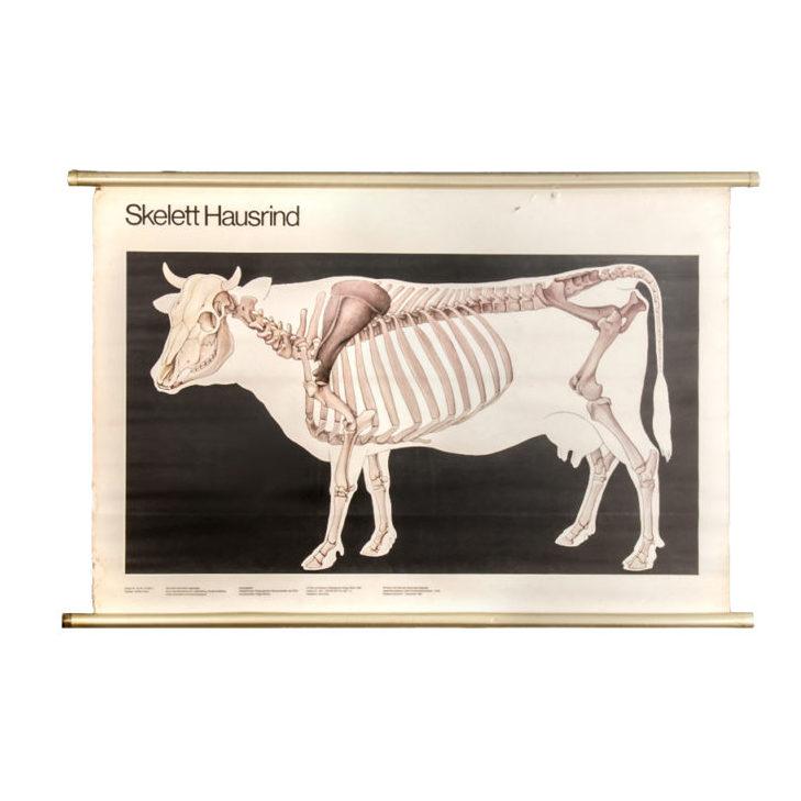 volk-wissen-cow